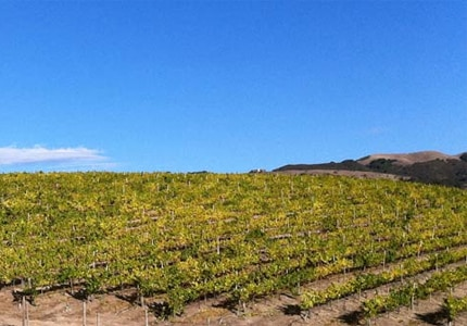 Talbott Vineyards in Carmel, California has produced excellent wines for over two decades