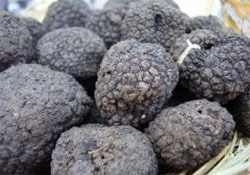 If black truffles thrive in California, they would be much more profitable than wine