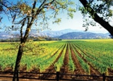 Learn more about Calistoga Ranch and other great wine country inns in the fall 2011 issue of our Quarterly Wine Newsletter