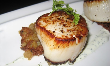 Scallops with sour cream and parsley pair well with Sauvignon Blanc, Chardonnay, sparkling wines and Pinot Noir