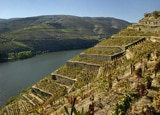 Quinta de la Rosa's vineyards climb steep, terraced hillsides in the Douro Valley