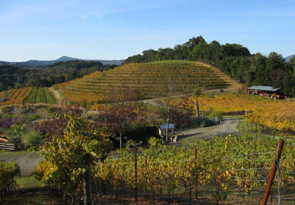 Benziger Family Winery in the Sonoma Mountain AVA