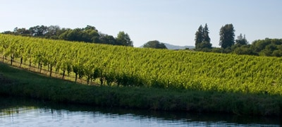 Van der Kamp Vineyard, La Follette's source of grapes on Sonoma Mountain
