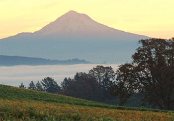 Mt. Hood rising above Stoller Family Estate in Oregon (photo credit: Mike Haverkate)