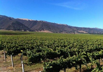 Talbott Vineyards in Monterey County, California