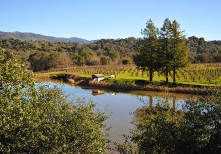 Testa Vineyards in Mendocino County, CA
