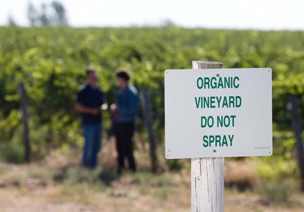 Find the best selections in GAYOT's list of the Top 10 Organic Wines