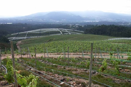 The vineyards of Adegas Valmiñor, producer of Serra da Estrela Albariño