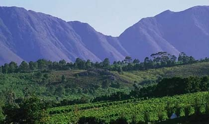 Bouchard Finlayson's vineyards in South Africa