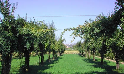 The vineyards of Cantina Novelli in Italy