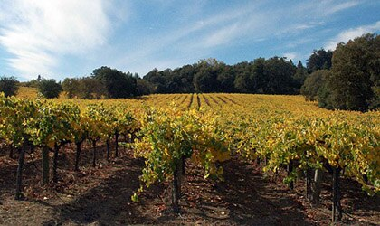 Iron Horse Vineyards in Sonoma County, California