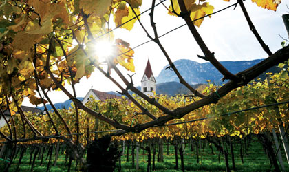 The vineyards of Kellerei-Cantina Andrian in Italy's Alto Adige region