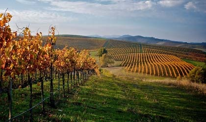 Robert Sinskey Vineyards in Los Carneros, California