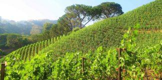 Wine Spirits Interviews