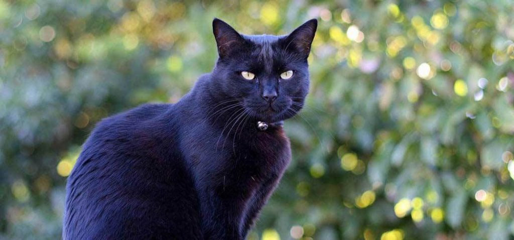 Black cats bringing bad luck is an ancient superstition that many people believe to this day