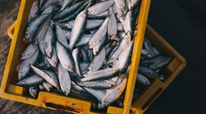 Mercury content in fish