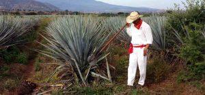 Tequila Casa Herradura