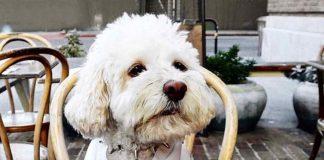 Dog-friendly restaurants near you