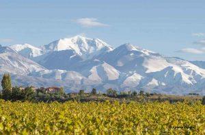 Malbec wine varietal description
