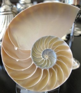 The Nautilus shell, 450 million years old is still a mystery and an inspiration for mathematicians