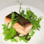 Sitka, Alaska troll-caught king salmon, sautéed, with English peas, potato gnocchi, and onion soubise