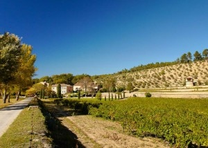 Château Miraval in Provence