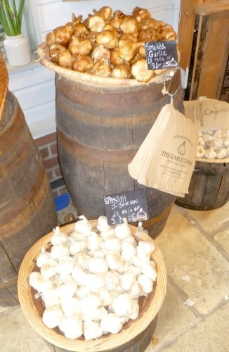 A variety of types of garlic grown on the Isle of Wight