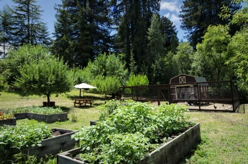 Farm-fresh ingredients at the Applewood Inn vegetable garden and chicken coop (Photo credit: Applewood Inn)