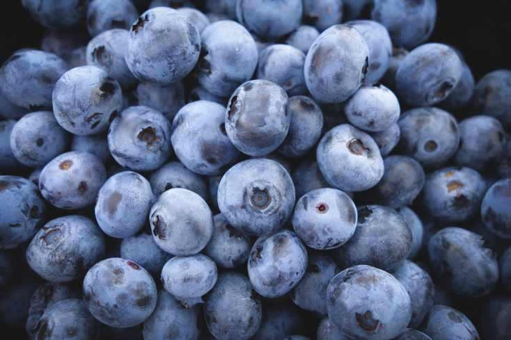 Blueberries get their rich blue color from neuron-protecting flavonoids