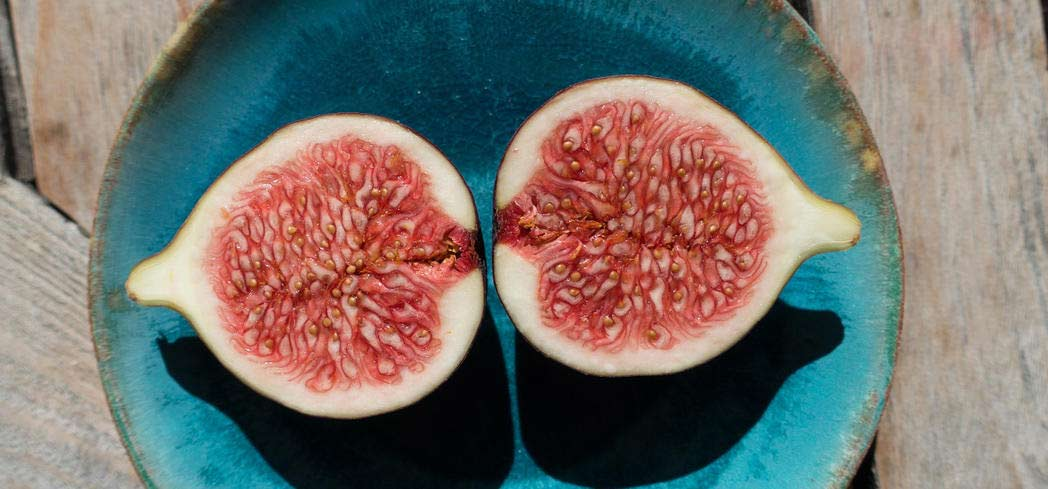 The fig is a symbol of fertility in many cultures