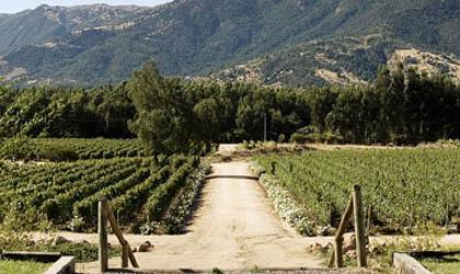 Hacienda Araucano Vineyard