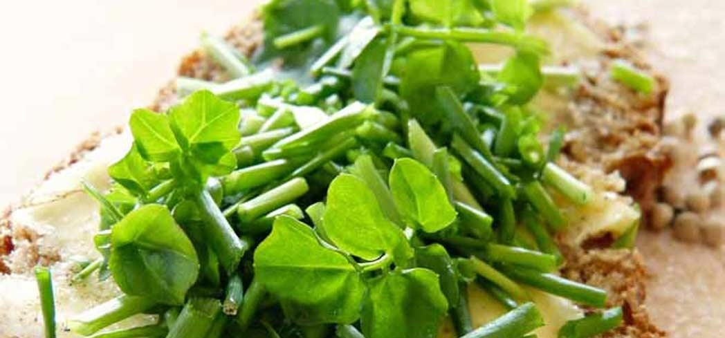 Watercress helps combat a variety of cancers