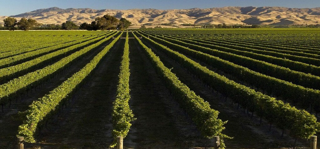 Classic New Zealand Wine Trail