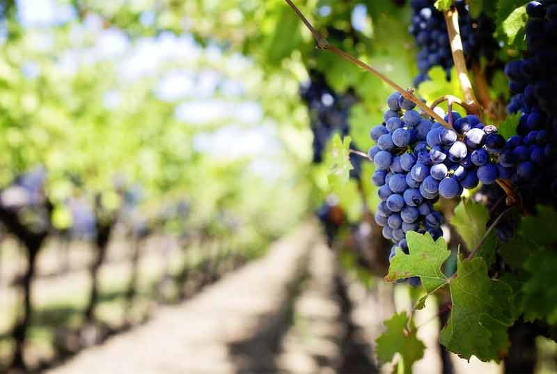 Discover the Best Organic and Biodynamic Wines
