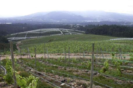 The vineyards of Adegas Valmiñor, producer of Serra da Estrela Albariño