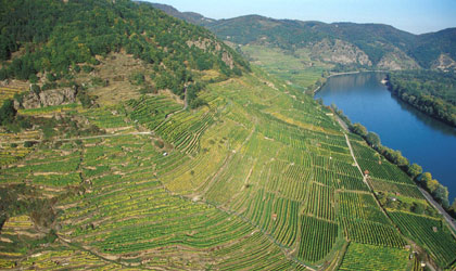Domane Wachau's vineyards hug steep slopes overlooking the Danube River in Austria