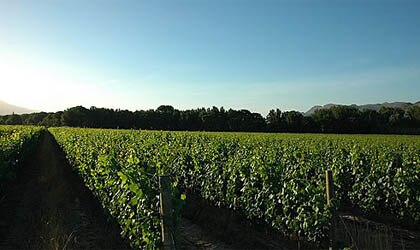 Môreson vineyards in South Africa