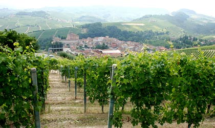 Nebbiolo vines above the town of Barolo, Italy