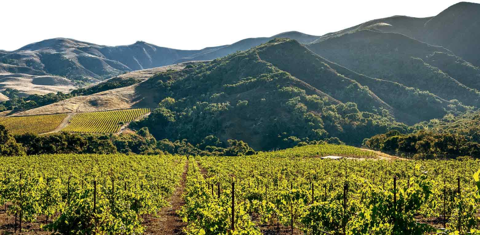 Alma Rosa Winery Santa Barbara CA