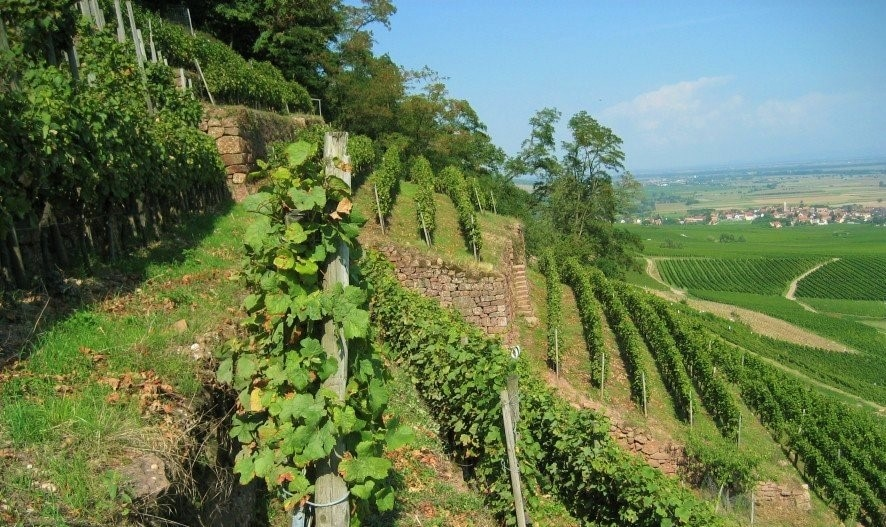 Domaine Schlumberger Vineyards | Alsace, France