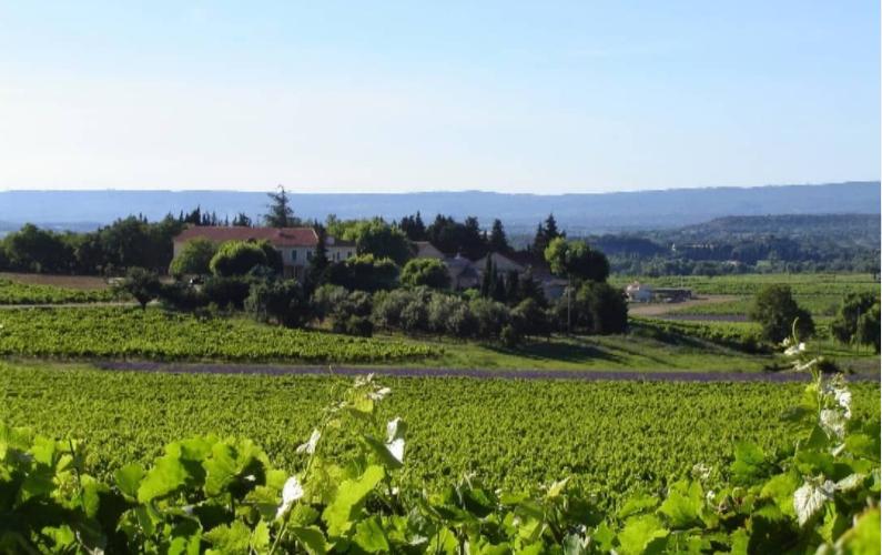 Domaine du Séminaire Côtes du Rhône vineyards
