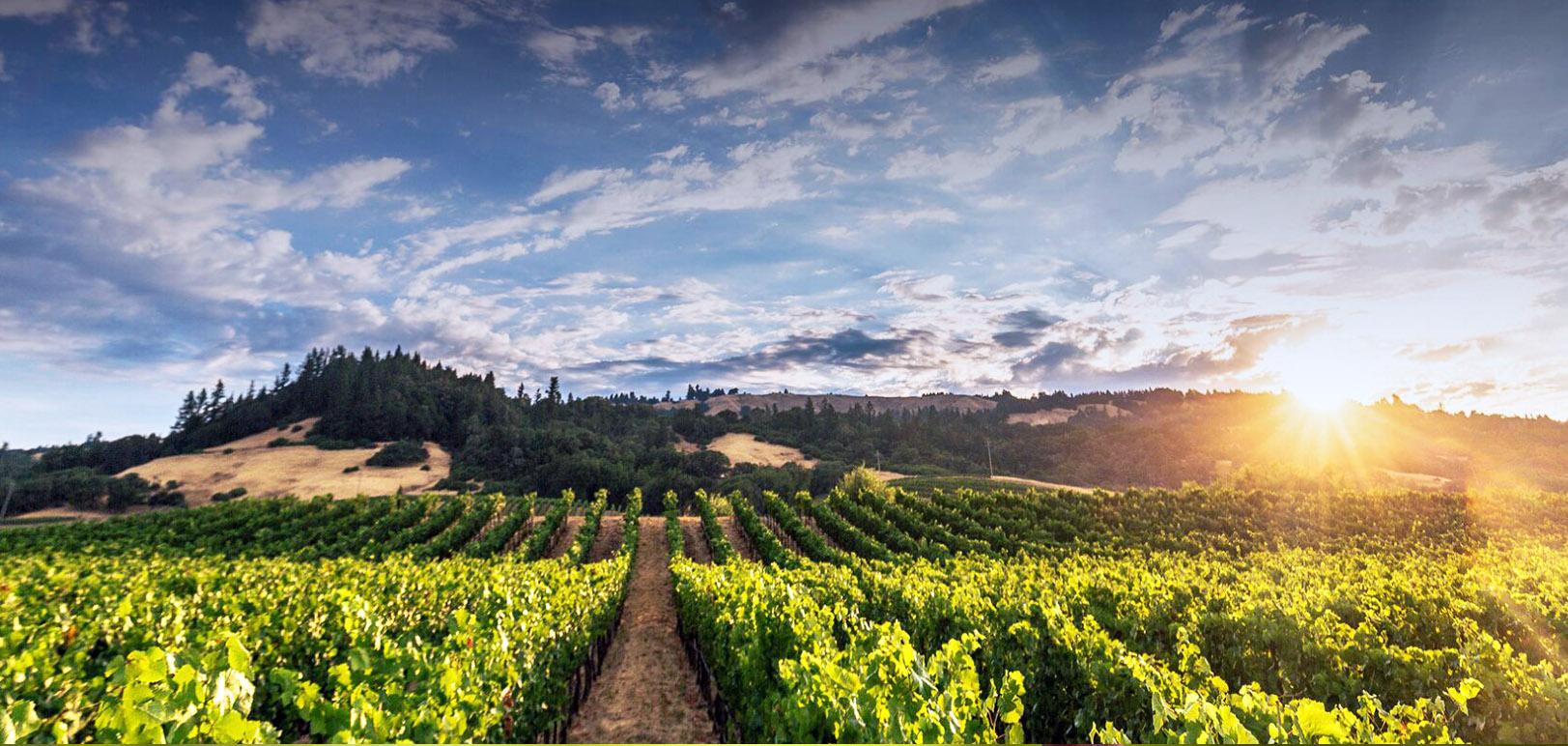 Fel Chardonnay Anderson Valley CA