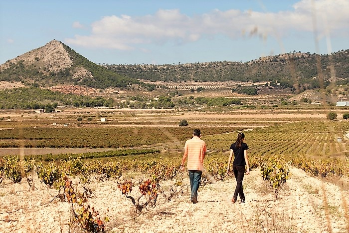 Bodegas Volver La Mancha vineyards