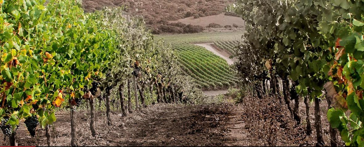 Vigne Surrau Vineyards Sardinia Italy