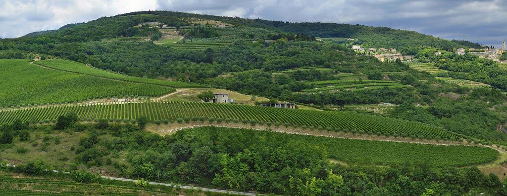 Zenato Vineyards Valpolicella Veneto Italy
