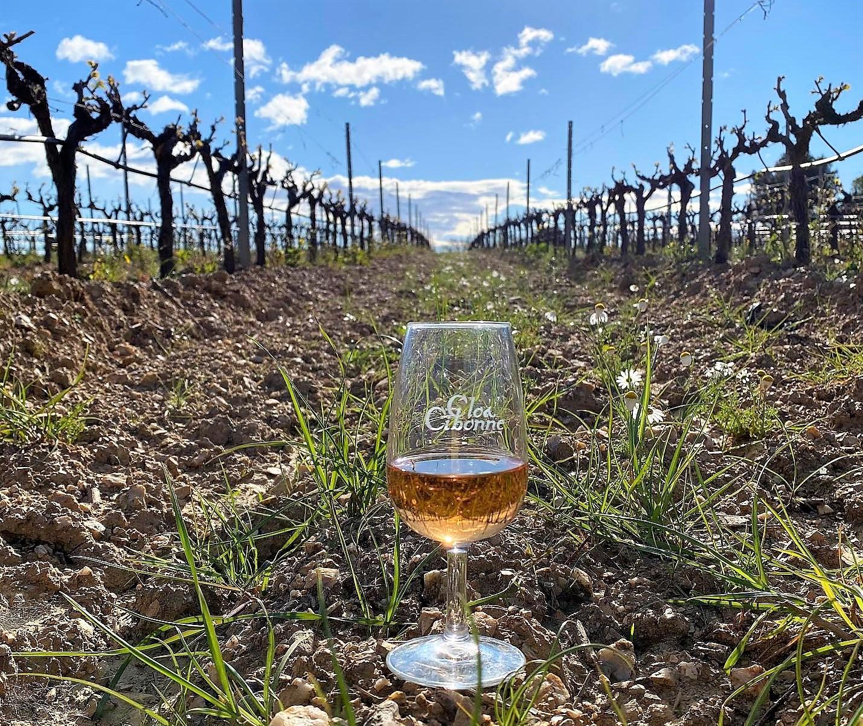 Clos Cibonne vineyards France