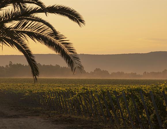 Sella & Mosca Sardinia Winery