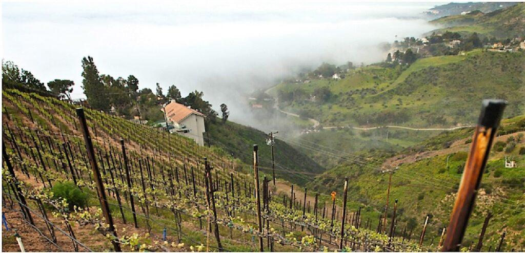 The Malibu Vineyard California
