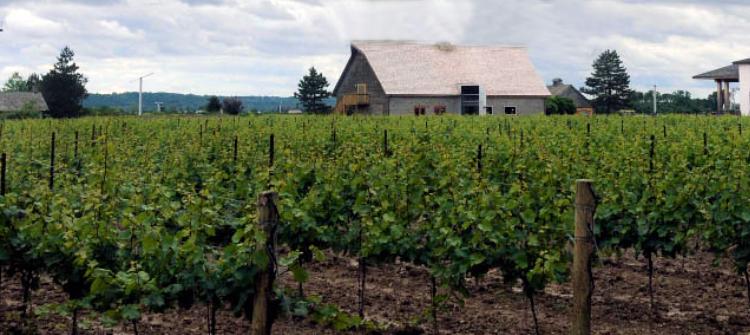 Inniskillin ice wine vineyards Canada